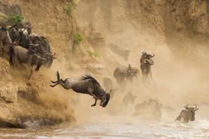 4 day massai mara anf lake nakuru safari