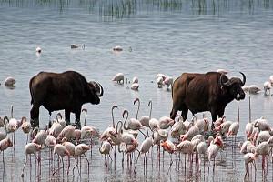 7 Days masai ,nakuru safaris
