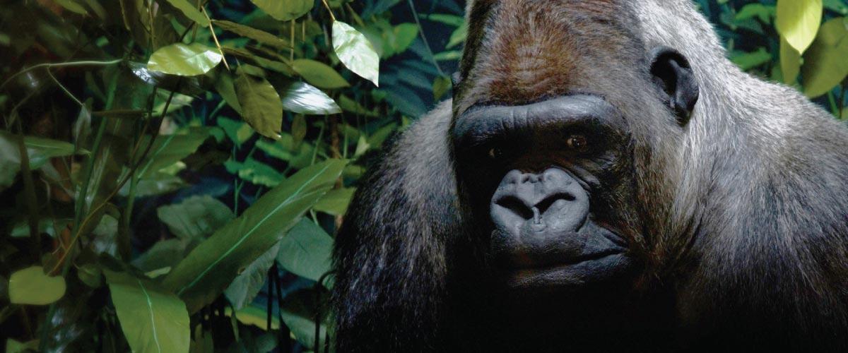 volcanoes Rwanda gorillas