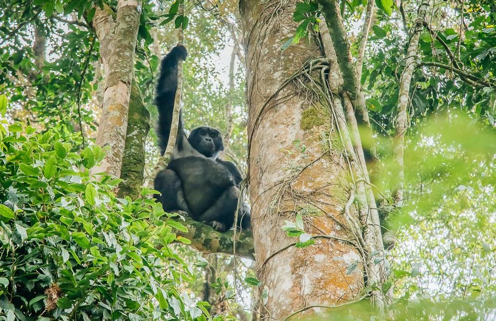 5 day Bwindi gorilla trek and Queen Elizabeth park safaris