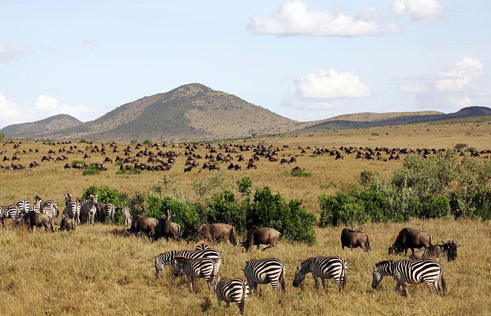 Masai_Mara_National_Reserve_042