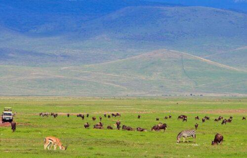 Ngorongoro crater-4 days Tanzania Safaris