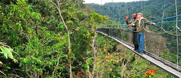 Nyungwe-Forest-Canopy Walk