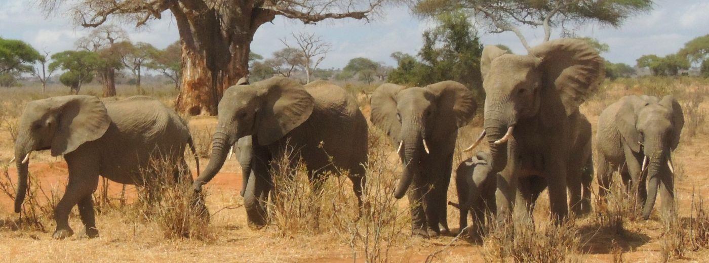 Tarangire-National-Park - 8 Days Tanzania Safaris