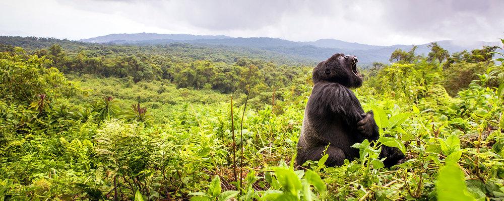 5 Day Virunga Gorilla Trek & Karisimbi Volcano Hike