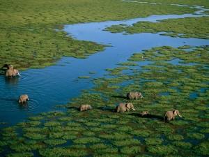 amboseli-national-park_9101_600x450