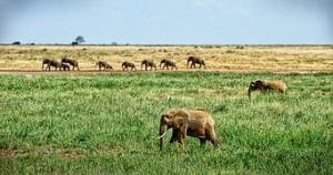 elephant-1065635__180