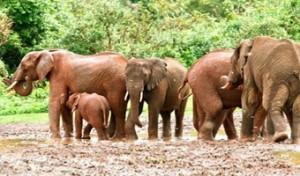 elephants-ark-aberdare-590b (1)