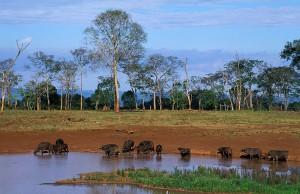 kenya safaris aberdare national park