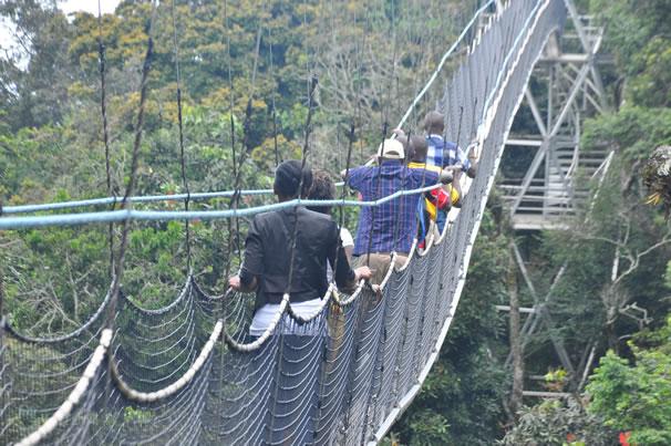 Canopy Walk - Nyungwe National Park