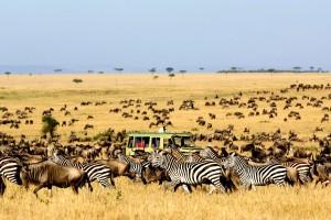serengenti national park