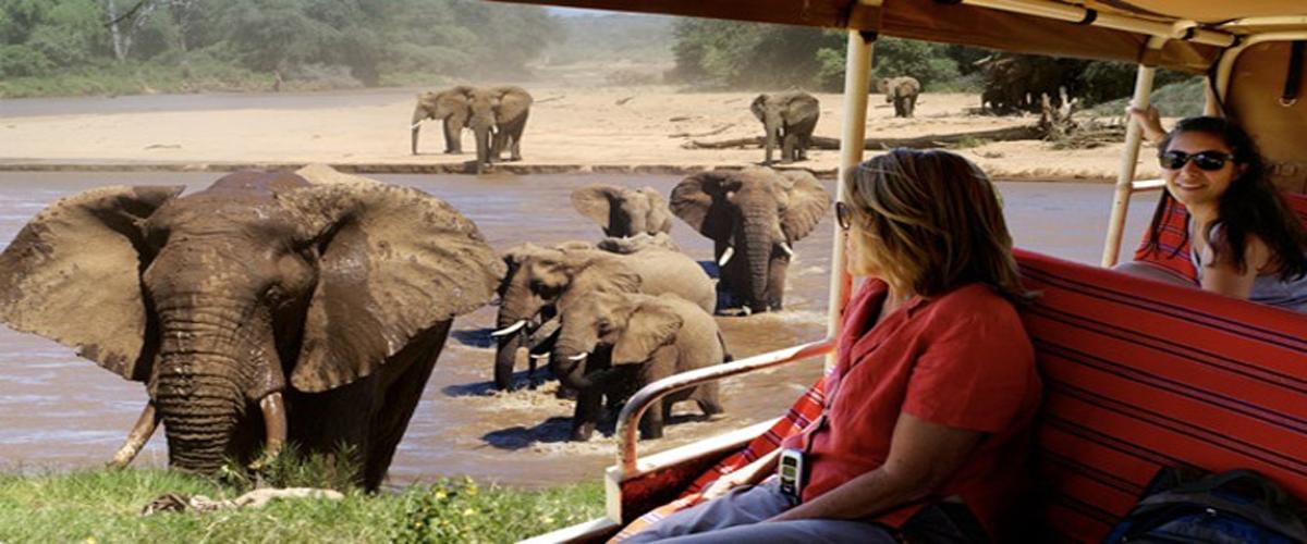 slider_elephant_watch_camp