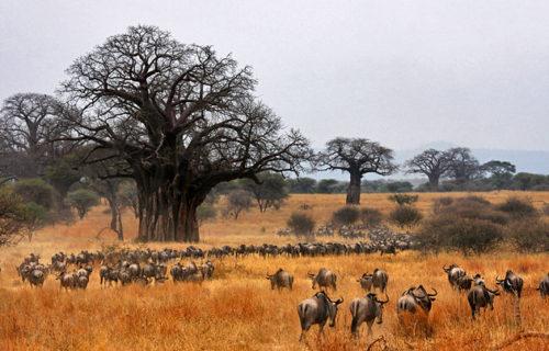 Wildlife Safari in Tarangire National Park