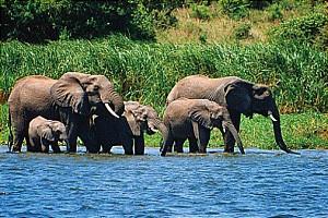 uganda wild life safaris 2