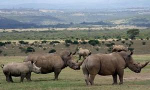 rhinoceros at aberdare national park