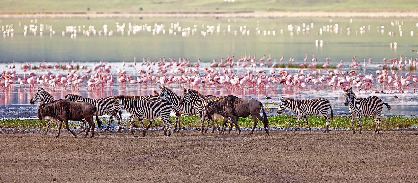 3 Days Tanzania Safaris