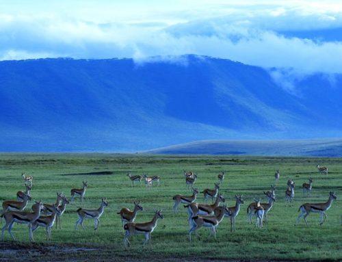 Ngorongoro Crater Safaris Tanzania