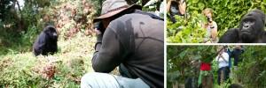 gorilla- bwindi gorilla tracking