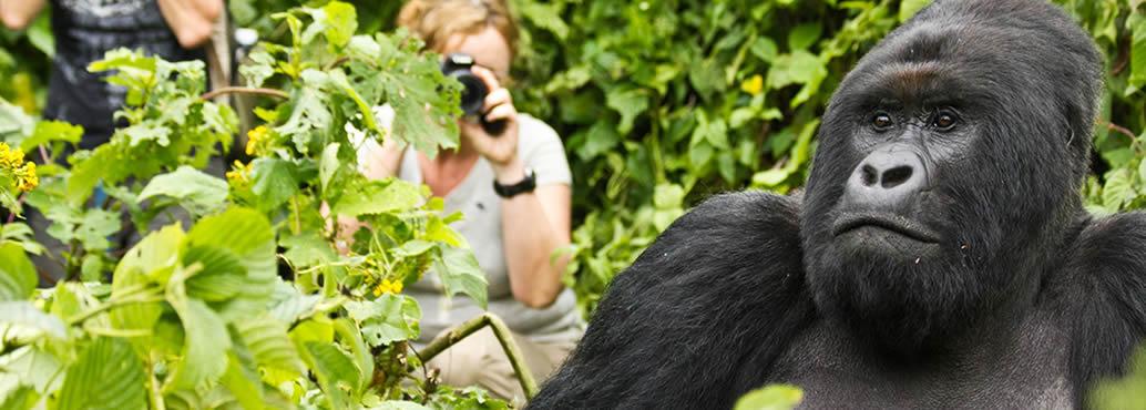 gorilla-trekking-safari