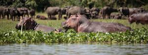 safari-tour-at-murchison-falls-national-park
