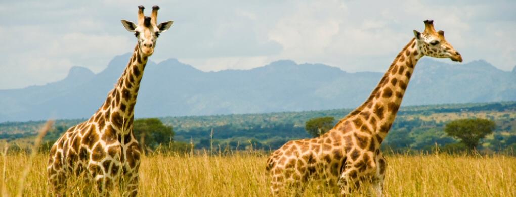 kidepo valley national park - 5 Days Uganda Safaris