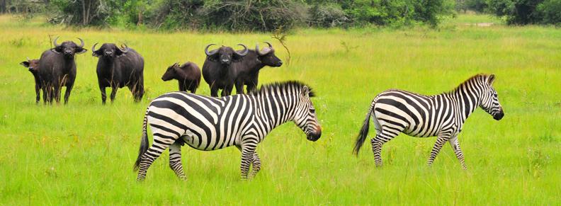 2 Days lake mburosafari tour
