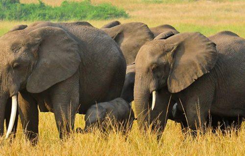Budget Safaris Queen Elizabeth