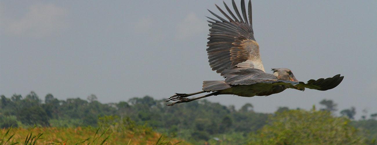 Birding