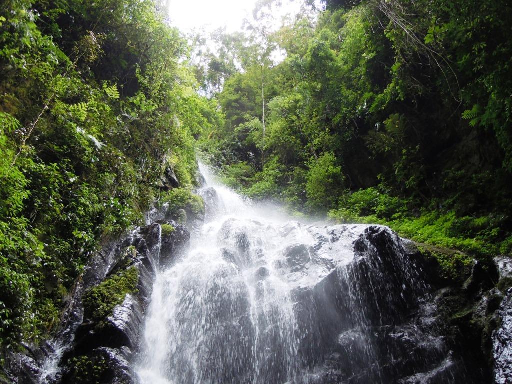 Bwindi Impenetrable national park - Uganda's National Parks