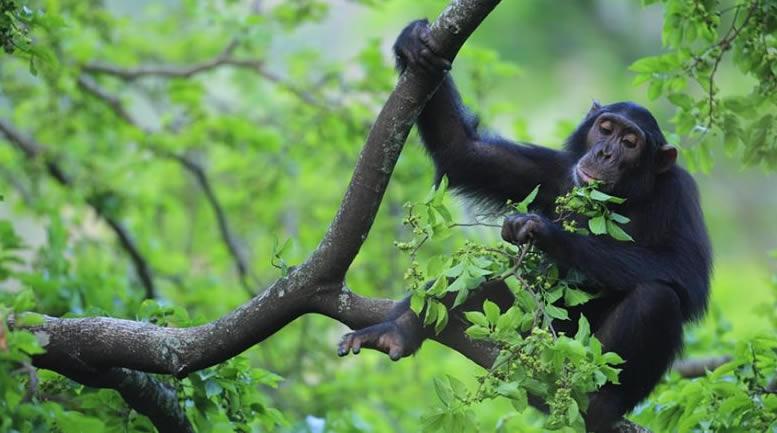 Kibale forest national park - Uganda's National Parks
