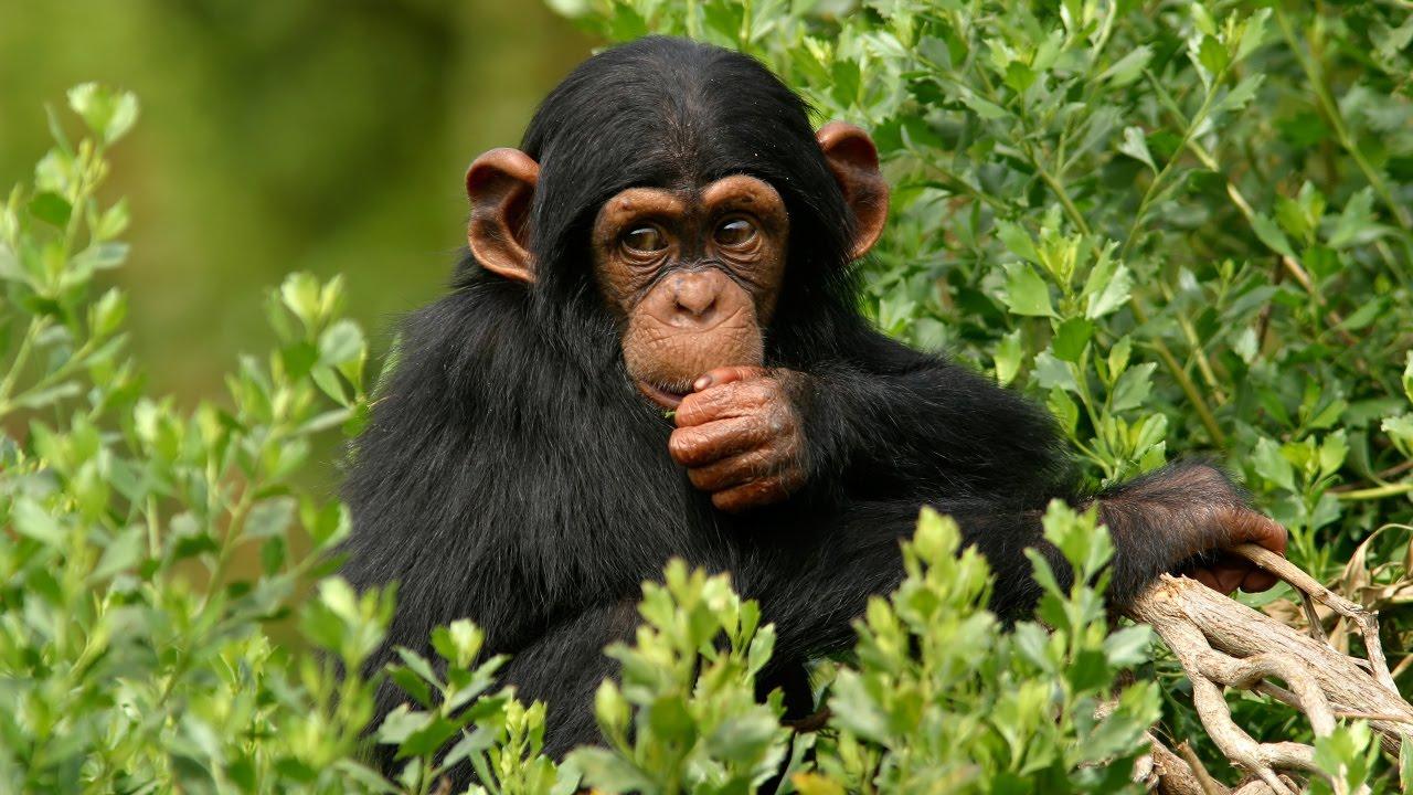 6 Days Chimpanzee Trekking & Wildlife Safari Uganda - Best