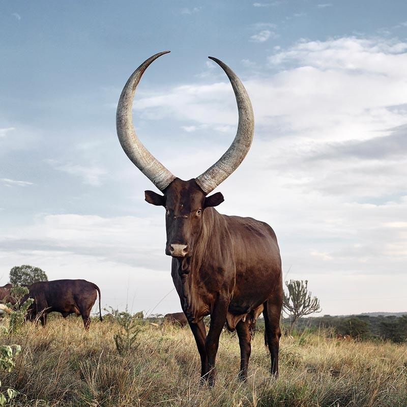 Mbarara - the land of milk and honey