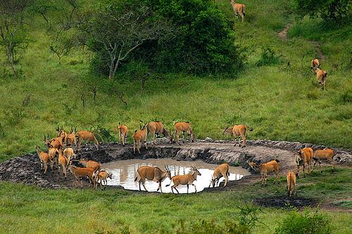 Lake Mburo national park - Uganda's National Parks