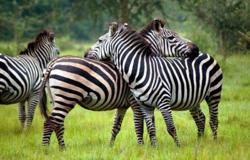 tourist Activities at Lake Mburo National Park