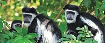 Mgahinga Gorilla national park - Uganda's National Parks.