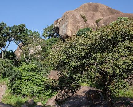 Nyero Rock painting