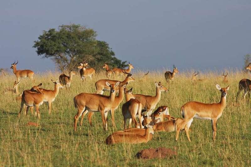 Queen Elizabeth National park - Uganda's National Parks