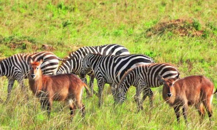 Kidepo National Park - Uganda's National Parks