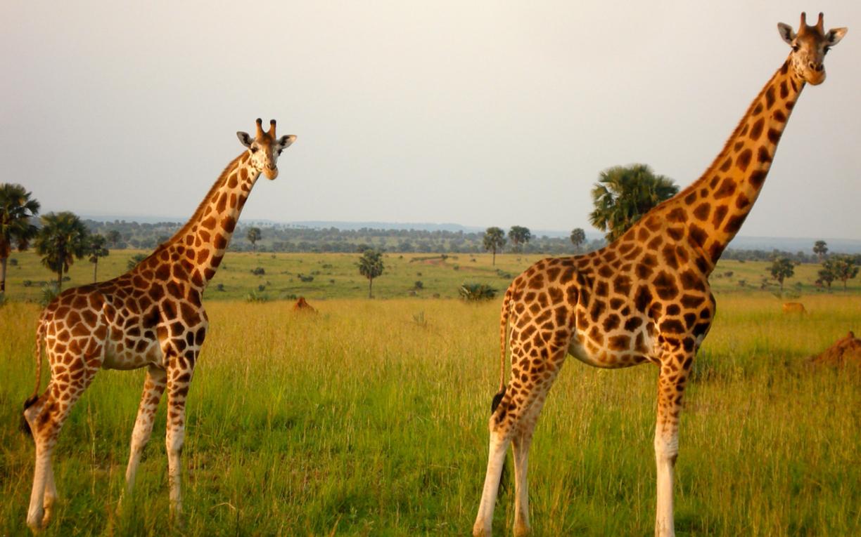 Queen Elizabeth National park - Uganda's National Park