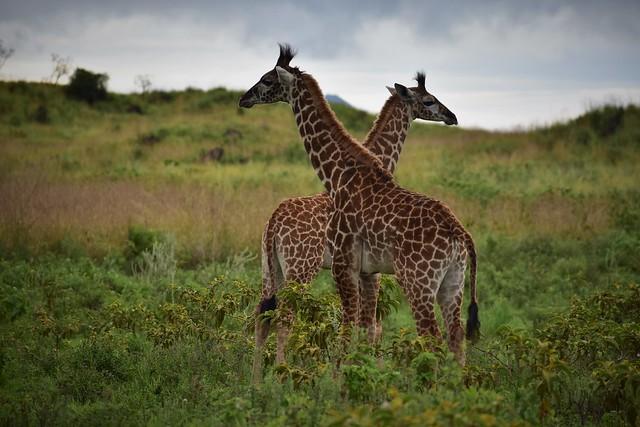 Arusha natonal park