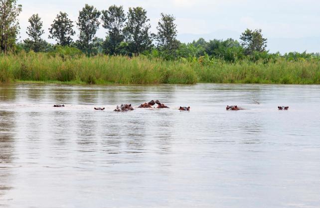 Lake Tanganyika - Tanzanian Safari