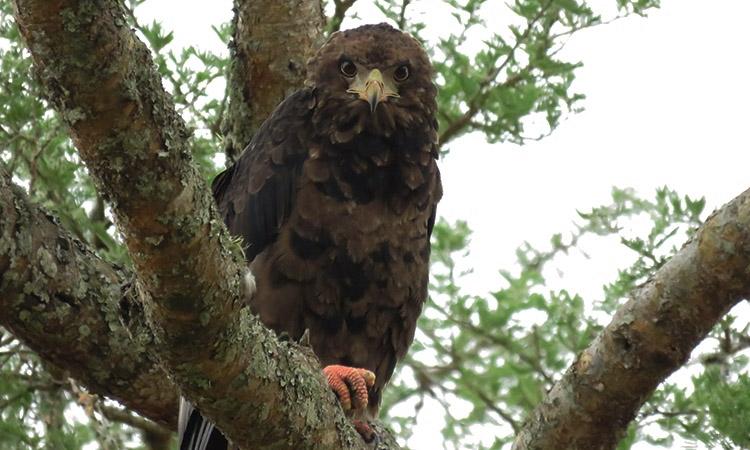 Entebbe Botanical Garden Birding Festival