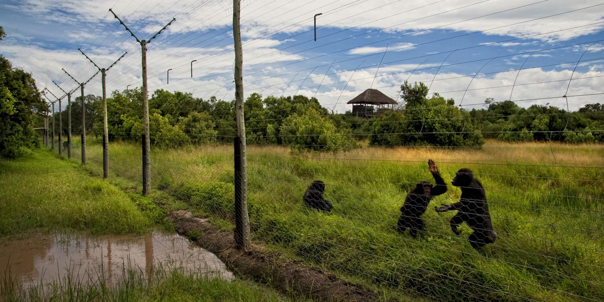 Ol Pejeta Chimpanzee Sanctuary