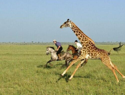 Best time to visit Kenya – Best months for Kenya safaris