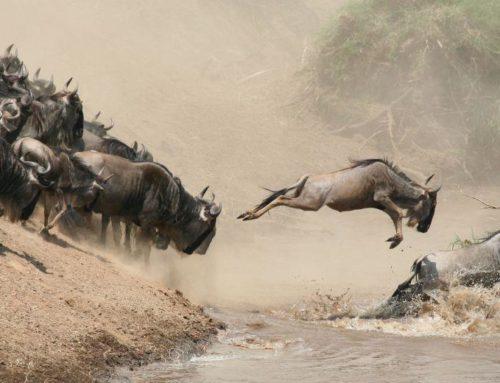 The Great Migration at Masai Mara