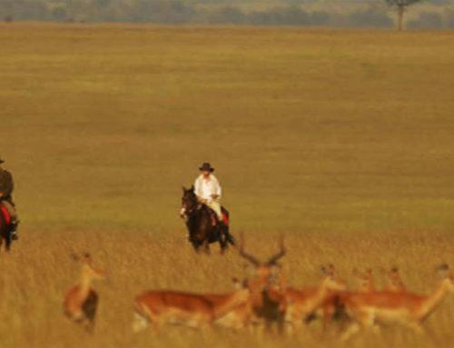 Kenya beyond safaris.