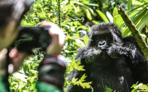 Rwanda Gorilla Safaris tours
