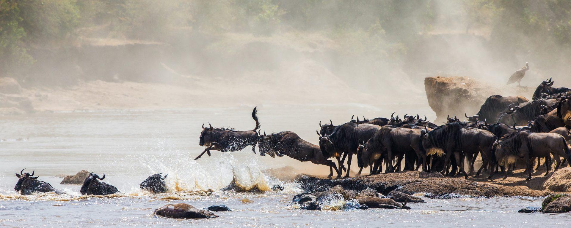 Tanzania Wildebeest Migration - Serengeti
