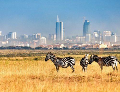 Kenya's Nairobi National Park safari Experience