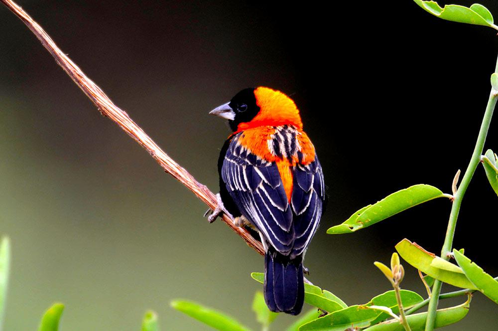 Bird Watching in mikumi national park